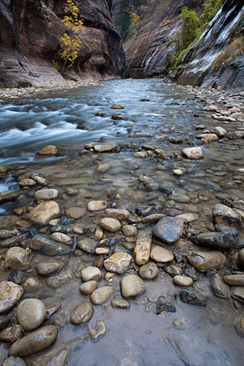 Stock Photo: 1555R-324875 Virgin River flowing in Zion National Park, Utah