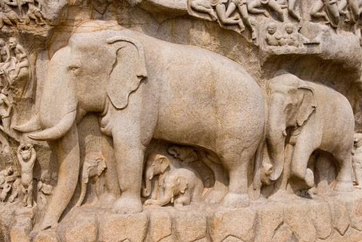Bas relief sculpture, Arjunas Penance, Mamallapuram, India : Stock Photo