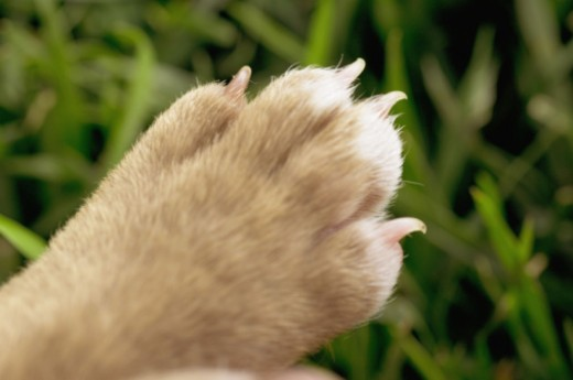 Paw of puppy : Stock Photo
