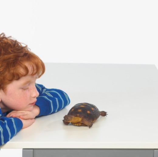 Boy with turtle : Stock Photo