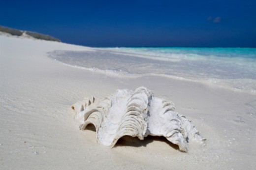 Clamshell on a beach : Stock Photo