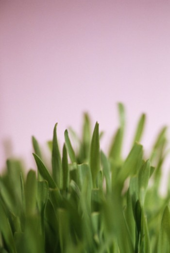 Stock Photo: 1555R-333541 Fresh cut grass