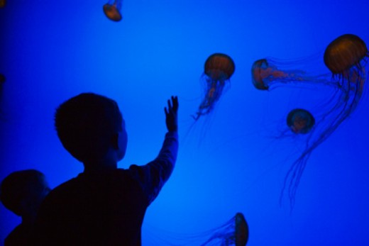 Children looking at jellyfish in aquarium : Stock Photo