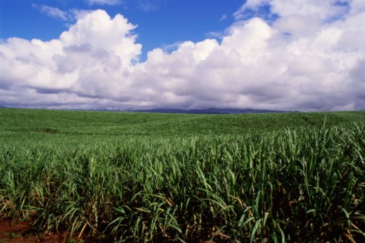 Farmland : Stock Photo