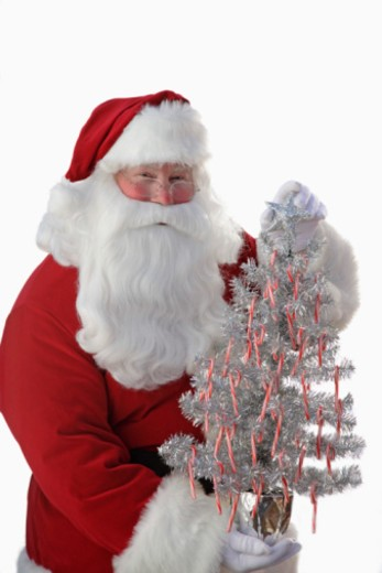 Santa Claus holding small Christmas tree : Stock Photo