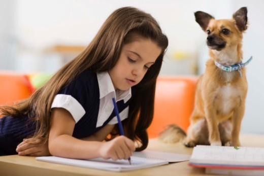 Stock Photo: 1555R-343104 Girl with dog and homework