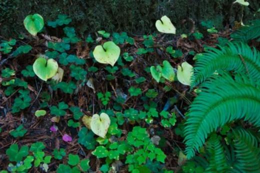 Stock Photo: 1555R-344071 Lush foliage