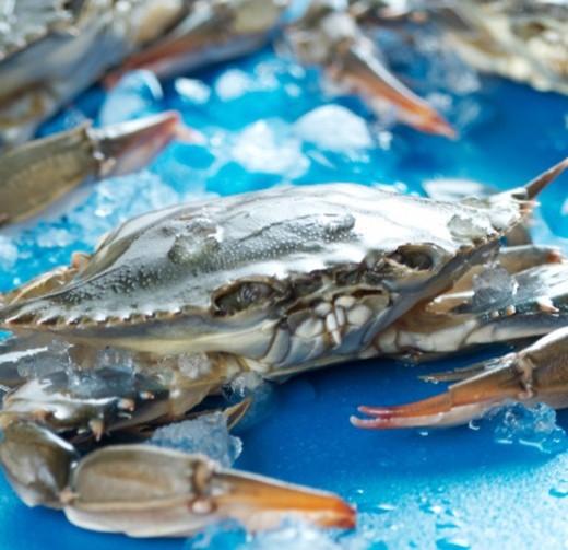 Stock Photo: 1555R-345933 Crab
