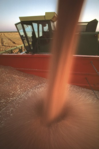 Stock Photo: 1555R-53082 Grain filling bin