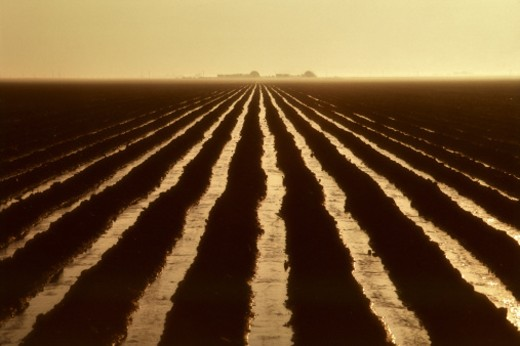 Stock Photo: 1555R-53090 Irrigated field