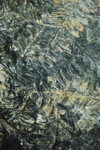 Stone imprint : Stock Photo