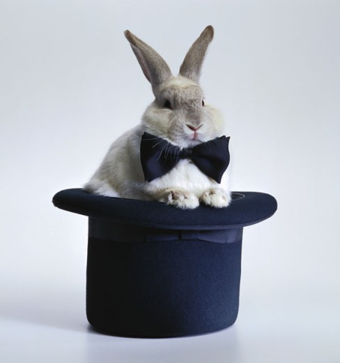 Stock Photo: 1555R-9063 Rabbit with bowtie and top hat