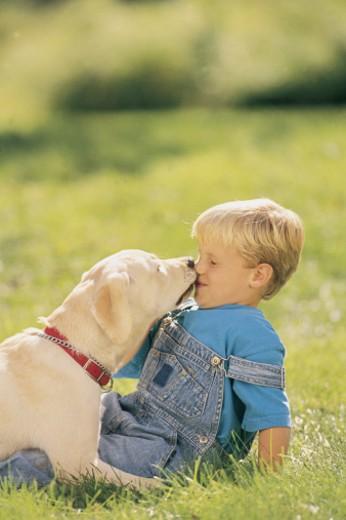 Stock Photo: 1557R-281051 Dog licking boy in backyard