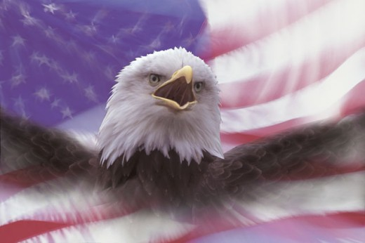 Stock Photo: 1557R-281609 Composite of bald eagle with American flag