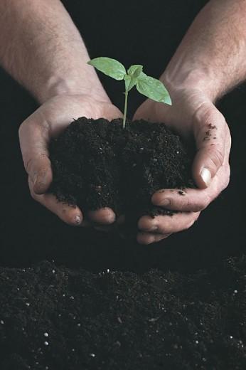 Hands holding seedling in soil : Stock Photo