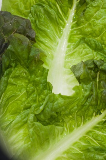 Close-up of greens : Stock Photo