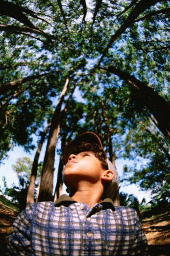 Boy in forest looking up at trees : Stock Photo