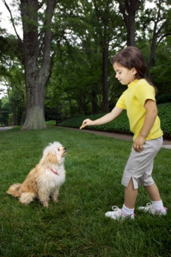Girl giving dog a treat : Stock Photo
