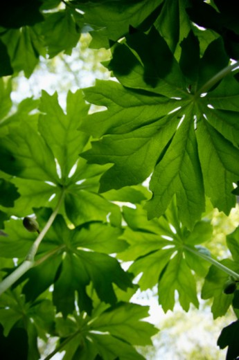 Underside of leaves : Stock Photo