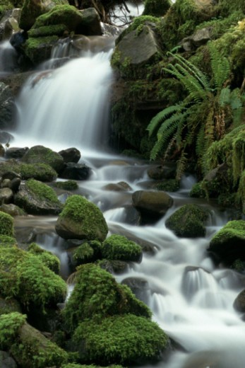 Stock Photo: 1557R-356770 Stream cascading over mossy rocks