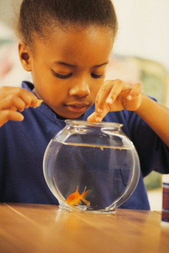 Stock Photo: 1557R-358745 Girl feeding pet goldfish