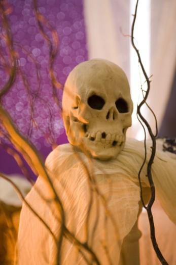 Stock Photo: 1557R-362654 Skull in spooky setting