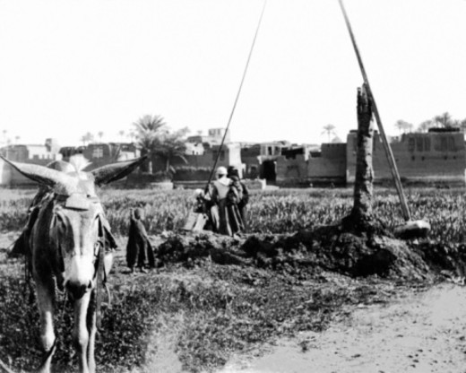 Stock Photo: 1557R-369760 Vintage image of people working crops