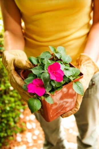 Woman holding potted plant : Stock Photo