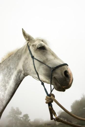 Profile of horse : Stock Photo