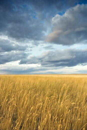 Stock Photo: 1557R-381090 Field with storm clouds