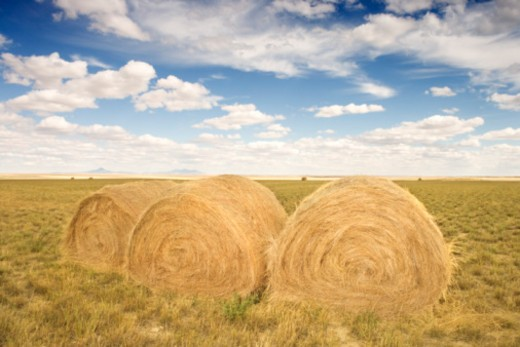 Hay bales in rural field : Stock Photo