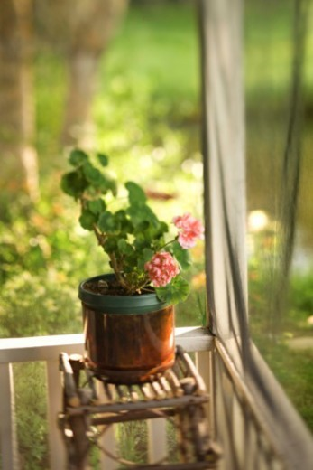 Flowering plant on porch : Stock Photo