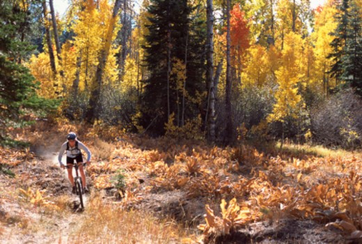 Stock Photo: 1557R-387657 Person mountain biking