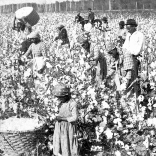 Stock Photo: 1557R-393081 Slaves picking cotton