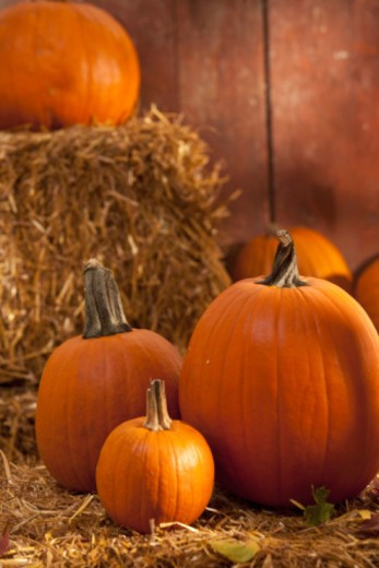 Pumkins on hay : Stock Photo