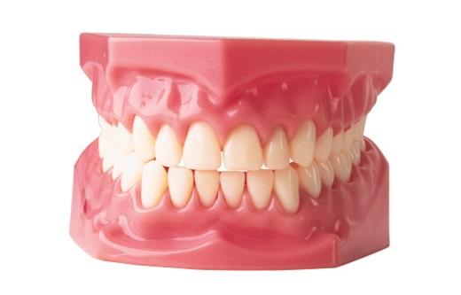 Stock Photo: 1557R-66097 Dentures