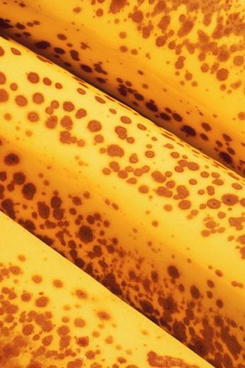 Stock Photo: 1557R-81049 Ripe bananas