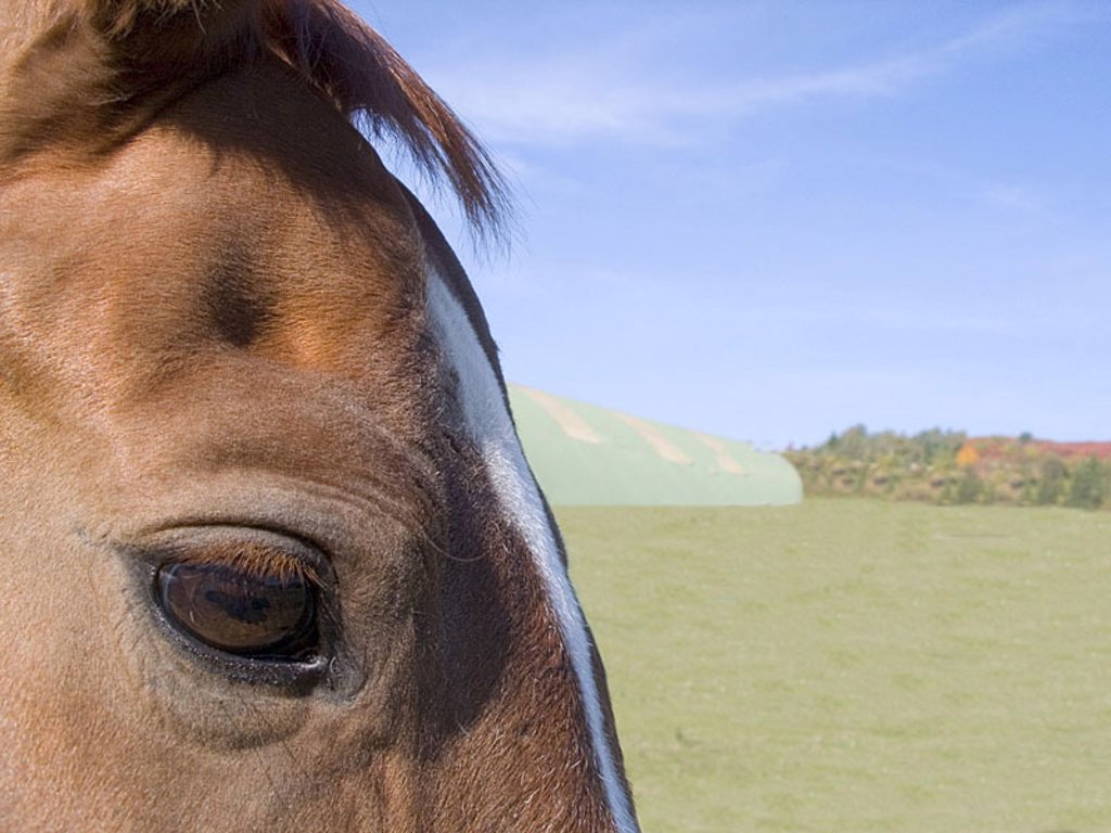 Horse, at the side, eye, detail, animal, head, horse-head, paleness, mammal, Sinnesorgan, perception, sees, fur, brown, old, wearily, inert, : Stock Photo