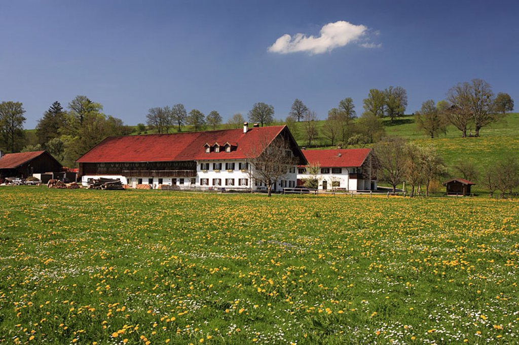 Germany, Bavaria, Pfaffenwinkel, flower-meadow, farm, spring, Southern Germany, meadow, flowers, spring-flowers, farmhouse, residence, rural, silence, silence, idylls, season, : Stock Photo