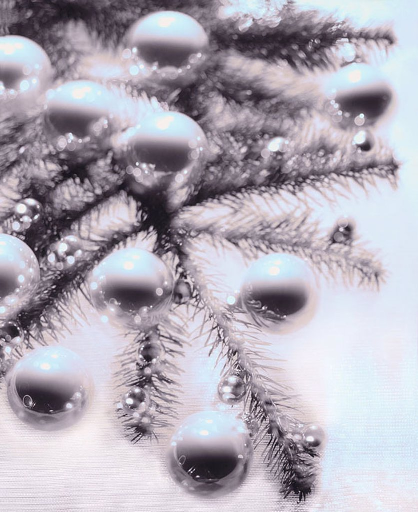 Stock Photo: 1558-115437 Christmas-tree, detail, branch, Christian-tree-balls, s/w, fuzziness, Advent, Christmas, tree, fir, decorated, festively, Christian-tree-jewelry tree-jewelry balls, Christmas-balls, Christmas-jewelry, Christmas-decoration, decoration, symbol, tradition, c
