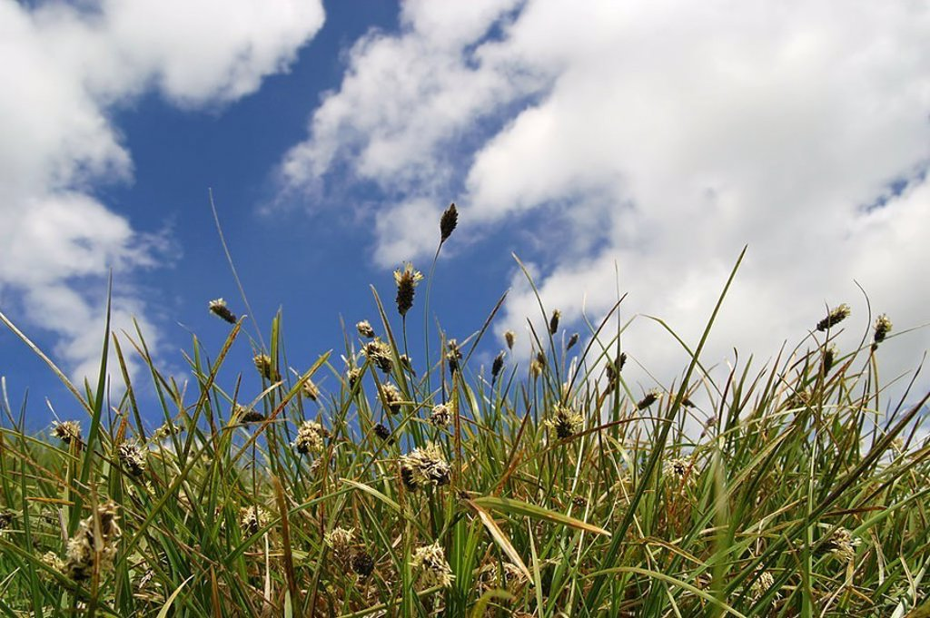 Stock Photo: 1558-120954 Nature, meadow, grass, cloud-heavens, mountain-meadow, heavens, clouds, nobody, silence, silence, heavens, clouds, loneliness, isolation, plants, vegetation, flora, grass, grass-stalks, blooms, Italy, Umbrien, Monte Sibillini,