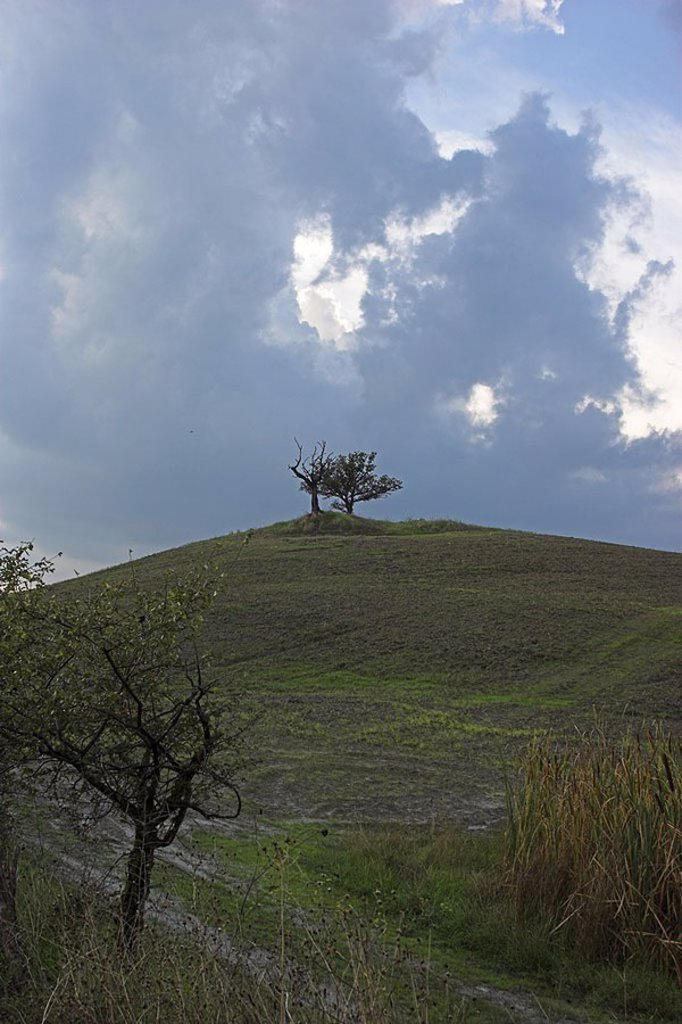 Stock Photo: 1558-120980 Italy, Tuscany, landscape, hills, tree, cloud-heavens, close to Pienza, Tuscany-landscape, hilly, typically, nature, field, grass, trees, mood, heavens, clouds, gray, dim, rainy, rain-clouds, dangerous, text-space,