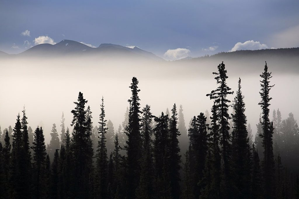 Stock Photo: 1558-123346 Canada, Yukon Territory, needle-forest, silhouette, trees, fog-swaths, mountains, North America, forest, conifers, morning-fog, fog, fog-drift, mist, hidden, mysteriously, mystically, nobody, silence, loneliness, wilderness, nature, heavens,