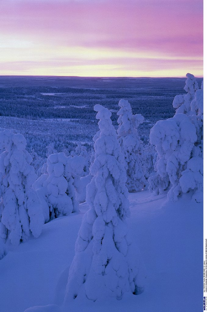Stock Photo: 1558-129631 Finland, Kuusamo, Winter landscape