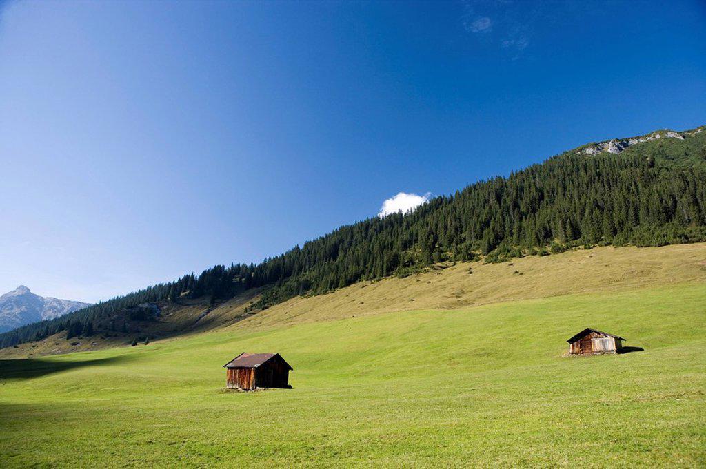 Stock Photo: 1558-132193 Austria, Vorarlberg, Arlberg, Lech-Zug, Alpine meadown, summer,. Austria, Vorarlberg, Arlberg, Lech-Zug, Almwiesen, summer,