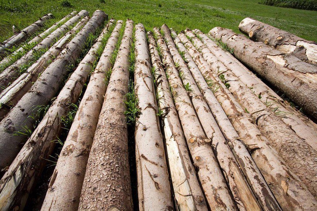 Stock Photo: 1558-132464 Meadow, tree-trunks, fells
