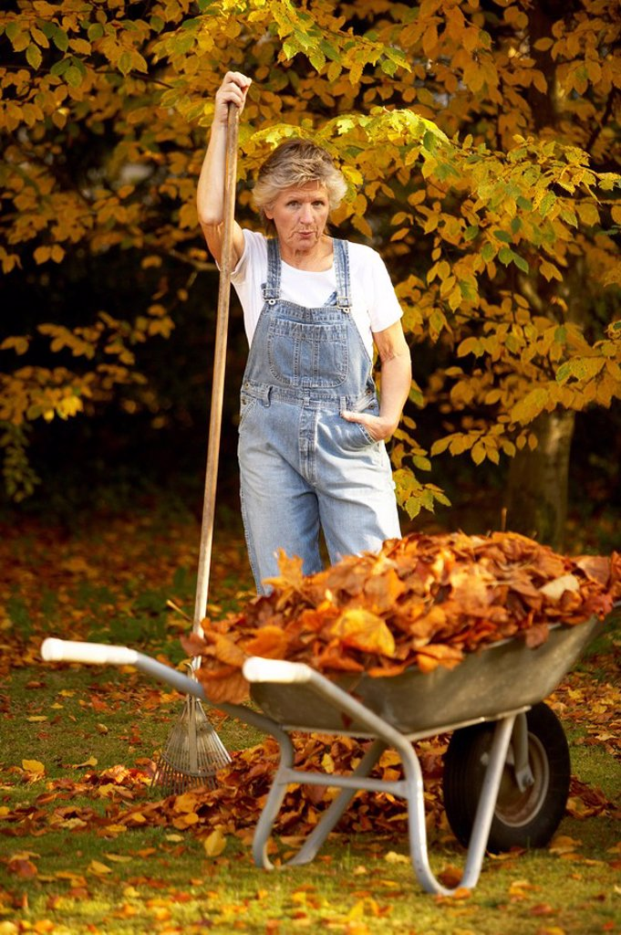 Garden, senior, overalls, gardening, critically, numeracys, wheelbarrows, foliage, autumn, pension, people, 66 years, 60-70 years, seniors, woman, ages, well Age, grey-haired, fit, stands nimbly, activity, assertive, challenging, works with pride, facial : Stock Photo
