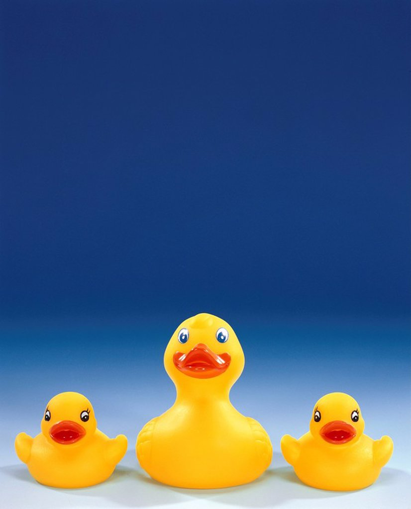 Stock Photo: 1558-136952 Rubber-ducks, yellow, size-difference, side by side, duck-family, toy, bath-toy, water-toy, ducks, de little three swimming-animals toy-duckien toy-ducks, bathtub-animals, bath-ducks, rubber duck, big, small, stringed, merrily, cutely, cheerfully, cheerfu. Rubber-ducks, yellow, size-difference, side by side, duck-family, toy, bath-toy, water-toy, ducks, de little three swimming-animals Spielenten toy-ducks, bathtub-animals, bath-ducks, Quietschenten, big, small, stringed, merrily, cutely, cheerf