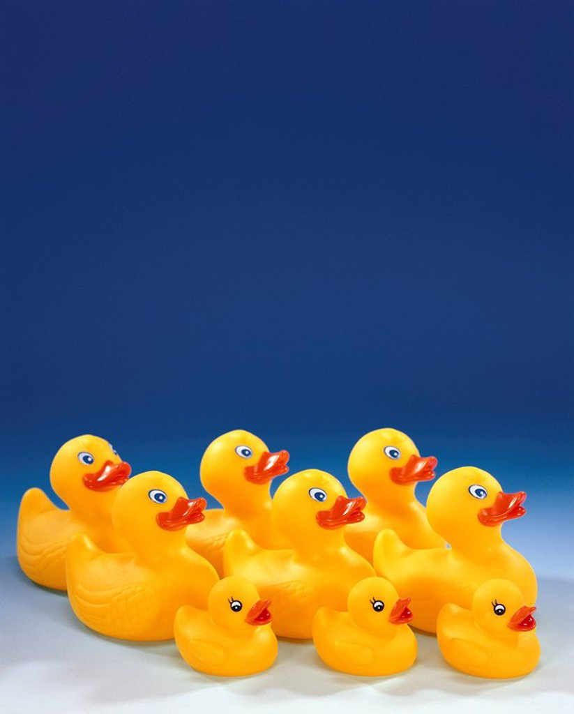 Stock Photo: 1558-136954 Rubber-ducks, yellow, swarm, size-difference, side-view, toy, bath-toy, water-toy, ducks, de little nine swimming-animals toy-duckien toy-ducks, bathtub-animals, bath-ducks, rubber duck, big, small, group, merrily, cutely, cheerfully, cheerfully, water-fu. Rubber-ducks, yellow, swarm, size-difference, side-opinion, toy, bath-toy, water-toy, ducks, de little nine swimming-animals Spielenten toy-ducks, bathtub-animals, bath-ducks, Quietschenten, big, small, group, merrily, cutely, cheerfully, chee