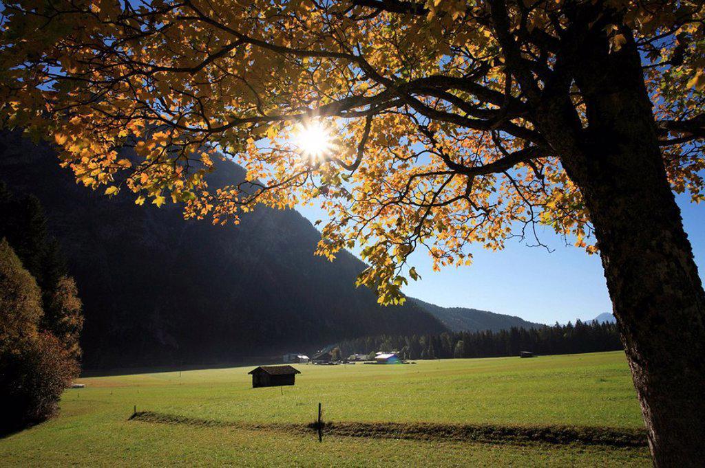 Austria, Tyrol, Leutasch, tree, meadows, Wetterstein-mountains, sun, back light, autumn, : Stock Photo